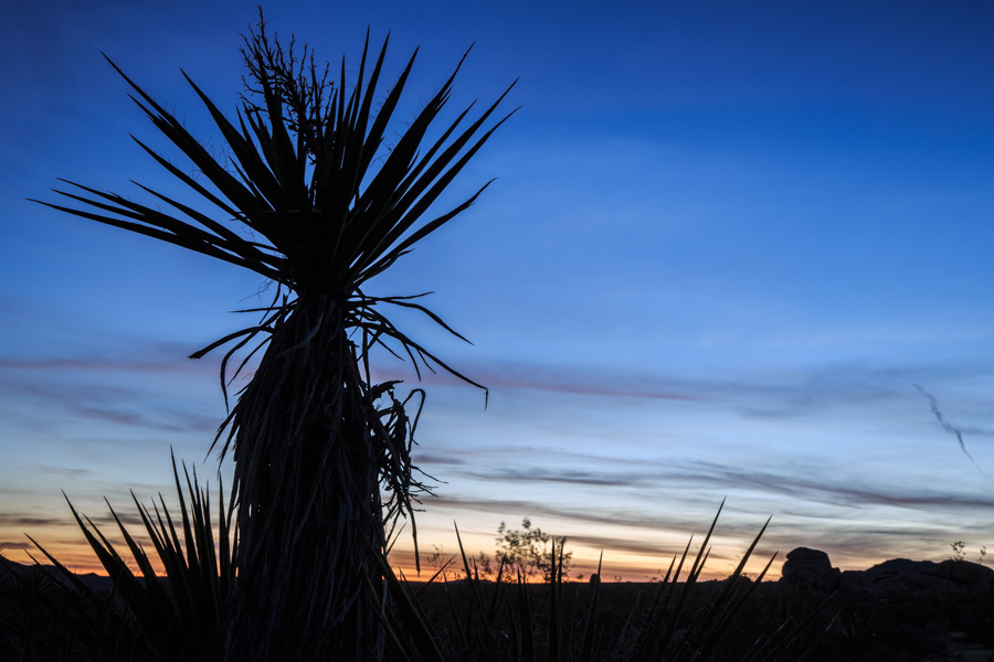 Tranquil | Joshua Tree, California